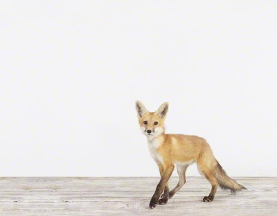 Fox_SharonMontrose